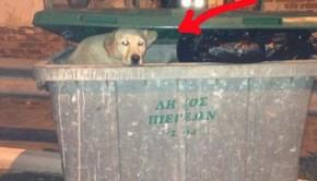 σκυλος Πλατανότοπος