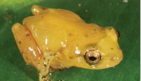 Βάτραχος Έβρου
