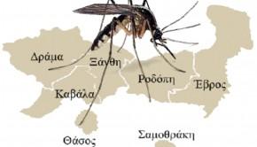 κουνούπια-αμθ