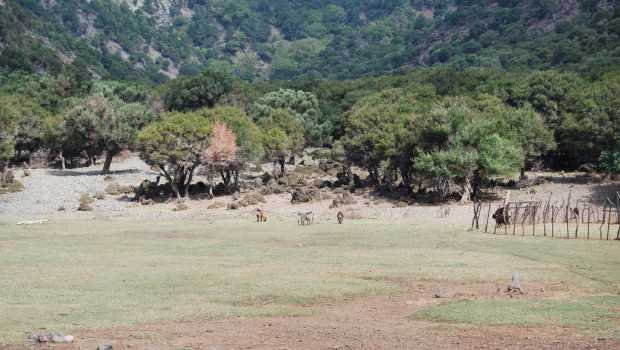 Κήποι Σαμοθράκης