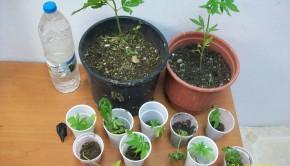 φυτα Κομοτηνη
