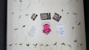 φυτα χρυσοχώρι