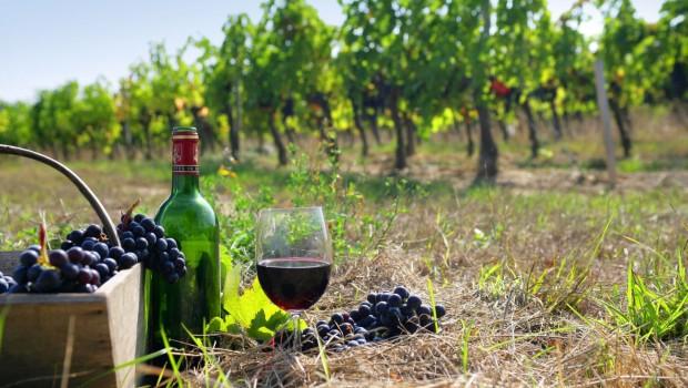κρασί Δράμα