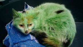 πράσινη γάτα