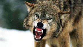 λυκος