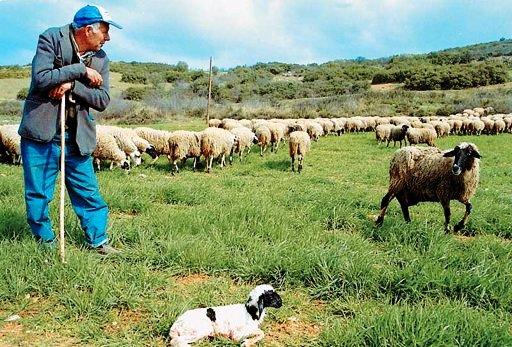 κτηνοτροφια