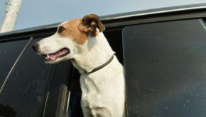 σκύλος αυτοκινητο