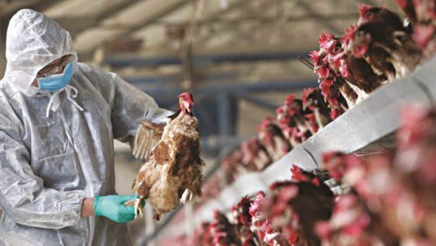 γρίπη πτηνων