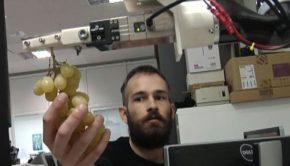 ρομποτ αμπέλι